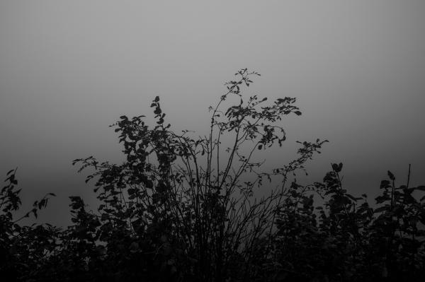 Fog_6389