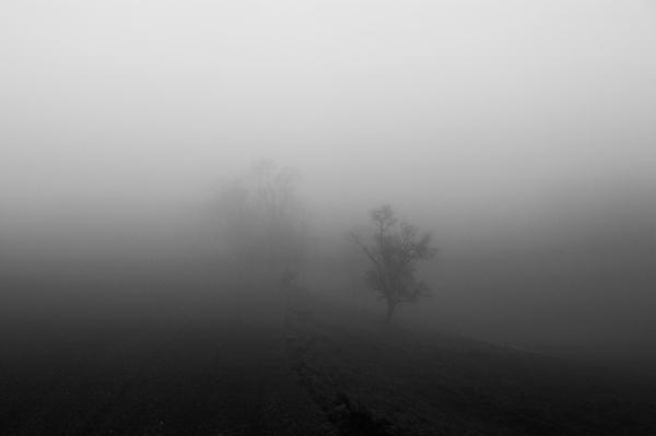 Fog_6397